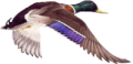 colvert-1.png