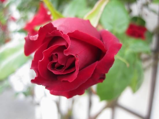 rose-mamou-photos.jpg