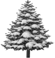 sapin-neige.png