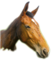 tete-cheval-1.png